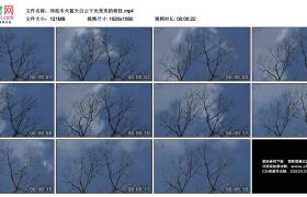 高清实拍视频素材丨仰拍冬天蓝天白云下光秃秃的树枝