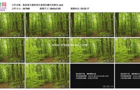 4K实拍视频素材丨航拍春天森林里长着绿色嫩叶的树木