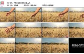 高清实拍视频丨手掌拂过麦田里的麦穗