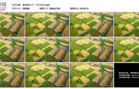 4K实拍视频素材丨航拍阳光下一大片农田