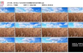 高清实拍视频素材丨蓝天流云下金色的麦田里麦穗随风摆动延时摄影
