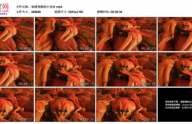 4K实拍视频素材丨摇摄煮熟的小龙虾