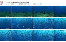 高清实拍视频丨水下摄影 海底的水草和游动的鱼群