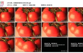 高清实拍视频丨拍摄旋转着的红色西红柿