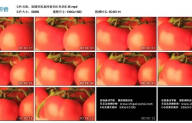 高清实拍视频丨摇摄明亮旋转着的红色西红柿