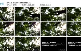 高清实拍视频丨仰拍阳光下的森林模糊散景