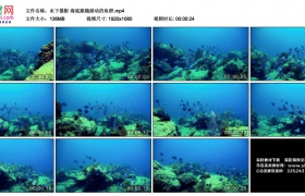 高清实拍视频丨水下摄影 海底跟随游动的鱼群