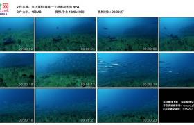 高清实拍视频丨水下摄影 海底一大群游动的鱼
