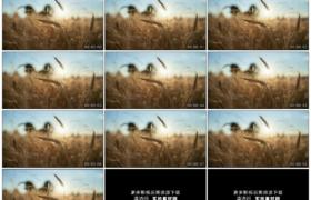 高清实拍视频素材丨微风吹动逆光中麦田里的麦穗轻摆