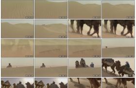 [高清实拍素材]沙漠骆驼队3