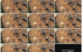 高清实拍视频素材丨特写树桩上忙碌的蚂蚁从树洞进进出出