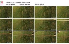 高清实拍视频素材丨无人机上帝视角俯拍一大片葡萄园