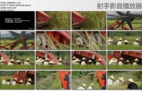 [高清实拍素材]收割水稻3