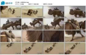 [高清实拍素材]沙漠骆驼队2