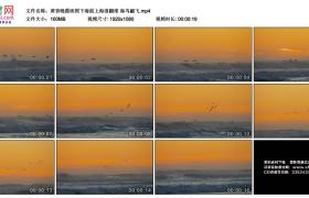高清实拍视频素材丨黄昏晚霞映照下海面上海浪翻滚 海鸟翩飞