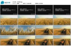 [高清实拍素材]小麦收割
