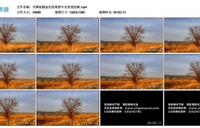 高清实拍视频丨升降拍摄金色的原野中光秃秃的树