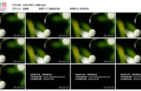 4K视频素材丨水珠从树叶上滴落