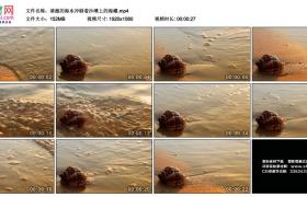 高清实拍视频丨清澈的海水冲刷着沙滩上的海螺