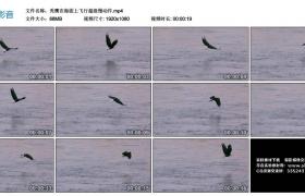 高清实拍视频丨秃鹰在海面上飞行超级慢动作