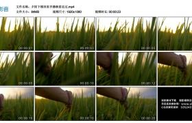 高清实拍视频丨夕阳下稻田里手拂秧苗走过