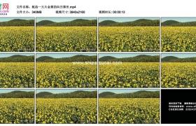 4K实拍视频素材丨航拍一大片金黄色的向日葵田