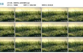 高清实拍视频丨清晨草地上晶莹的露珠