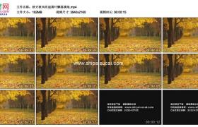 4K实拍视频素材丨秋天秋风吹起黄叶飘落满地