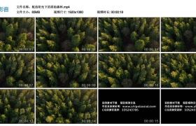 高清实拍视频丨航拍阳光下的原始森林
