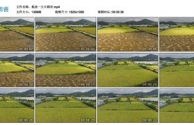 高清实拍视频丨航拍一大片稻田