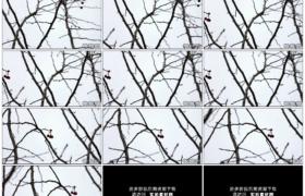 高清实拍视频素材丨摇摄冬天光秃秃的树枝前雪花飘飞