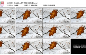 高清实拍视频素材丨冬天枯枝上孤零零的黄叶轻轻摆动