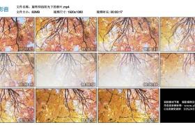 高清实拍视频素材丨旋转仰拍阳光下的秋叶