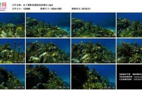 高清实拍视频丨水下摄影拍摄海底的礁石