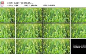 高清实拍视频丨清晨逆光下挂着露珠的青草