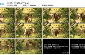 高清实拍视频丨几只梅花鹿走向草地