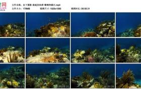 高清实拍视频丨水下摄影 海底的鱼群 珊瑚和礁石
