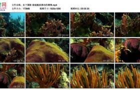 高清实拍视频丨水下摄影 海底随波摆动的珊瑚
