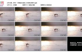 高清实拍视频素材丨特写一只蚂蚁在桌面上寻觅然后爬开