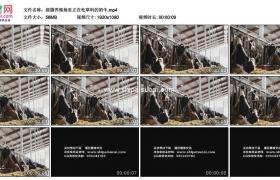高清实拍视频素材丨摇摄养殖场里正在吃草料的奶牛