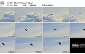 高清实拍视频丨秃鹰在天空和云朵之间飞翔