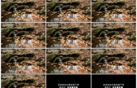 高清实拍视频素材丨小溪在秋天掉满落叶的树林里流淌
