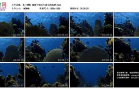高清实拍视频丨水下摄影 海底仰拍水中游动的鱼群