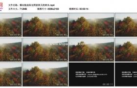 4K实拍视频素材丨横向航拍阳光照射秋天的树木