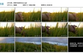 高清实拍视频丨移摄手抚秧苗走过