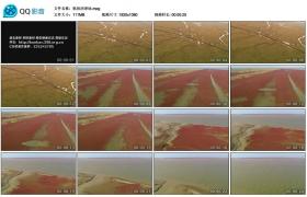 [实拍高清素材]航拍沼泽地