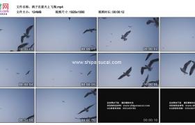 高清实拍视频素材丨鸽子在蓝天上飞翔