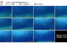 高清实拍视频丨水下摄影 海底穿梭游动的群鱼