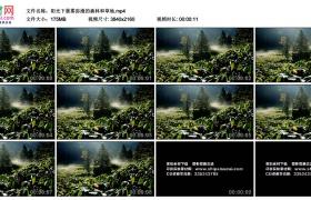 4K视频素材丨阳光下晨雾弥漫的森林和草地