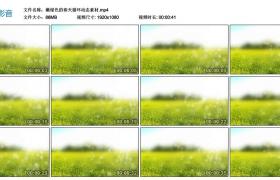 高清动态视频丨嫩绿色的春天循环动态素材